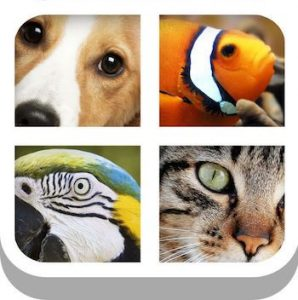 Trucchi Close Up Animal Quiz